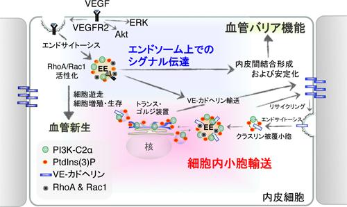 Summary scheme.ppt