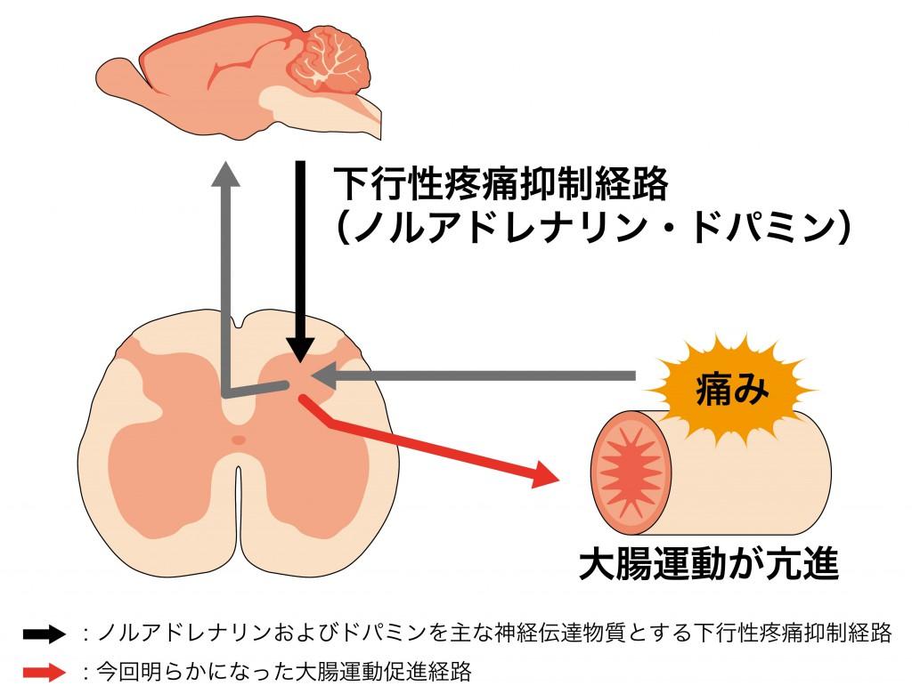図(RGB)